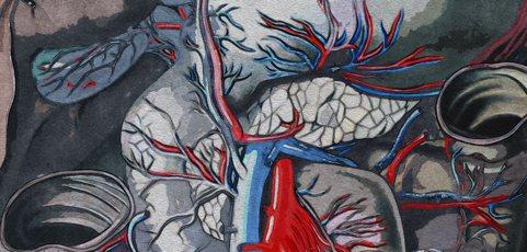 Fortbildung für ErgotherapeutInnen: Anatomie der oberen Extremität am Präparat lernen