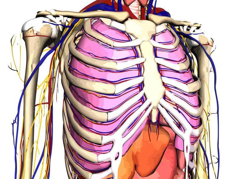 Visuelle Lernhilfe für Anatomie – google Body-Browser|handlungs:plan